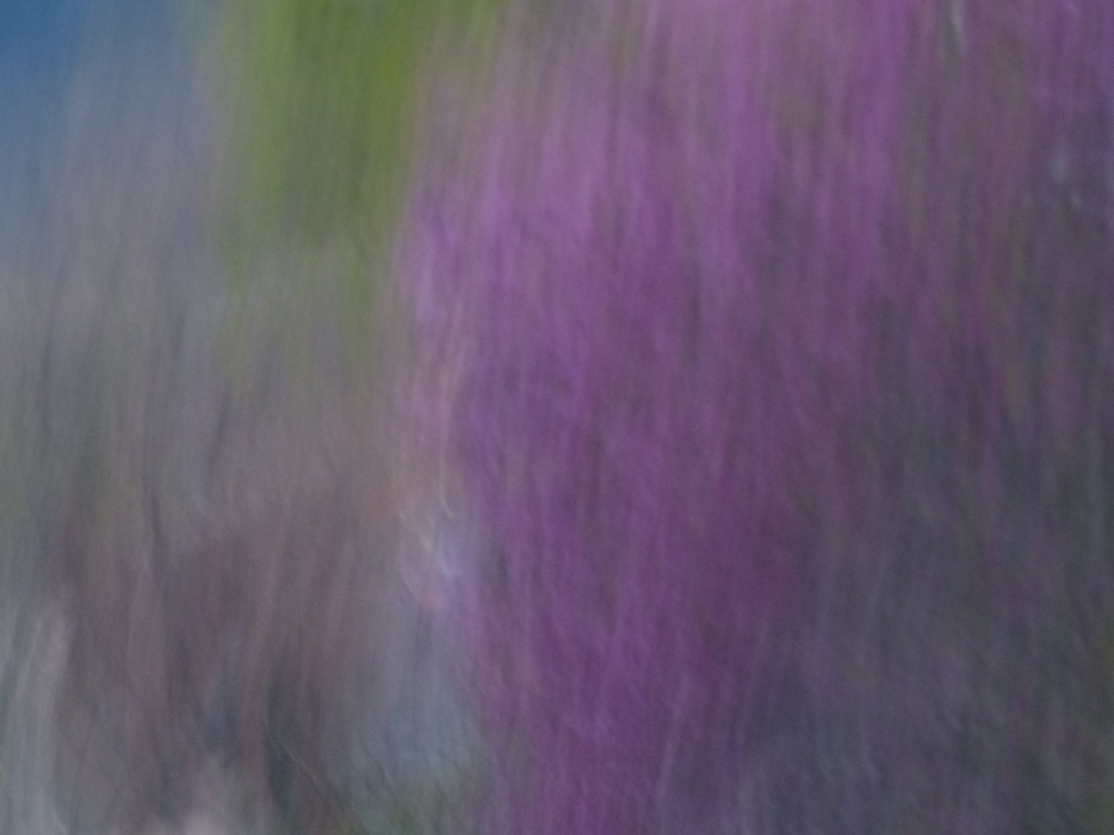 Photo fond violet flou Rozenn Guilcher