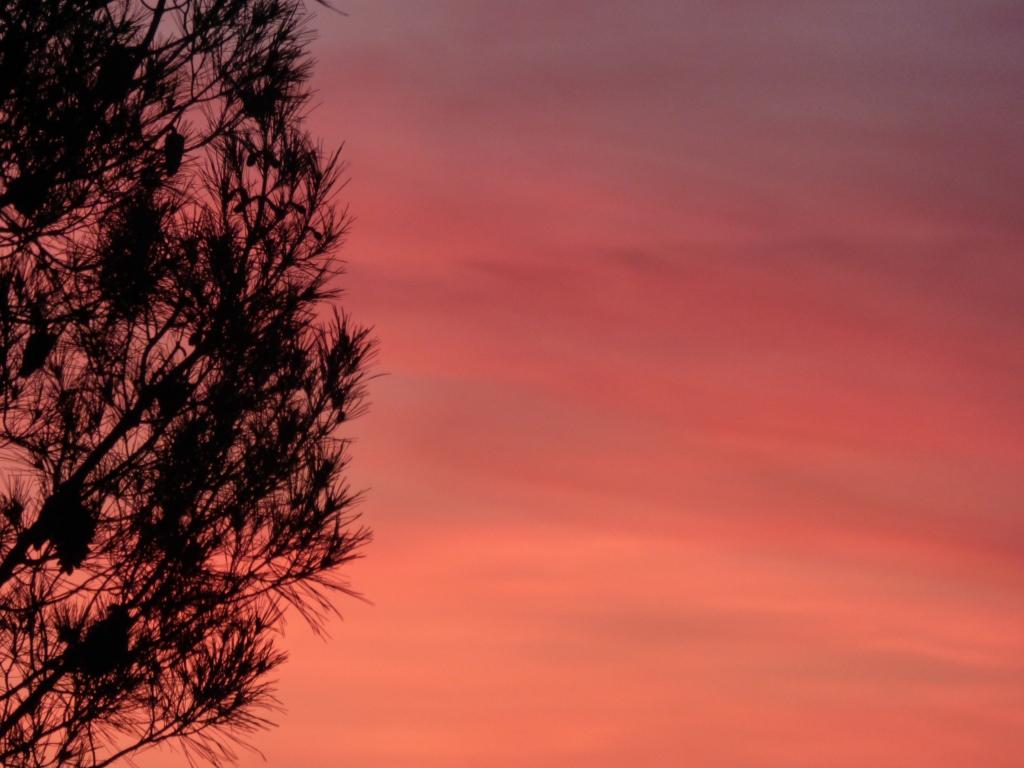 Photo arbre soleil Rozenn Guilcher
